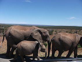 Elephants and Baby Elephant Addo Elephant National Park Photograph