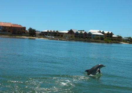 travel and talk western australia photograph,dolphin photograph,travel australia,travel australasia,rottnest island, mandjar bay photograph