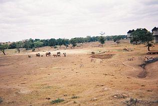 safari huts kenya, travel and talk photograph,travel kenya,kenya flights,kenya safari photographs,kenya safari photos,kenya elephants,elephants photos