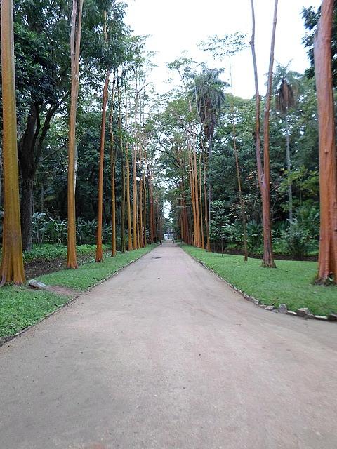 travel and talk botanical gardens rio,travel rio,matt thomas travel writing,travel brazil,travel south america,botanical gardens rio photograph.
