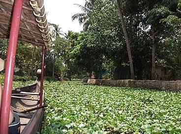 kerala backwaters travel and talk photograph,travel india,travel writing matt thomas, india photograph,travel kerala