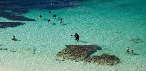 travel and talk western australia photograph,dolphin photograph,travel australia,travel australasia,rottnest island photograph