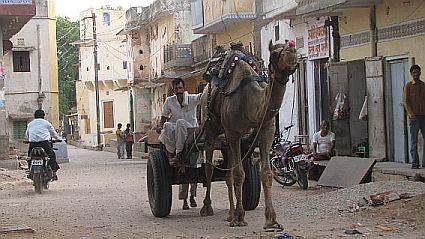 travel and talk samode village photograph,travel india,travel jaipur,camel photograph,india camel photograph,anita jain travel writing.