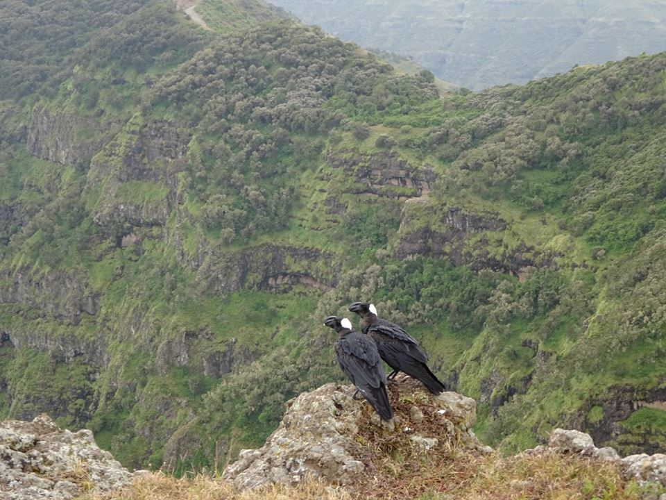 Travel and Talk Travel Simien Mountains National Park and