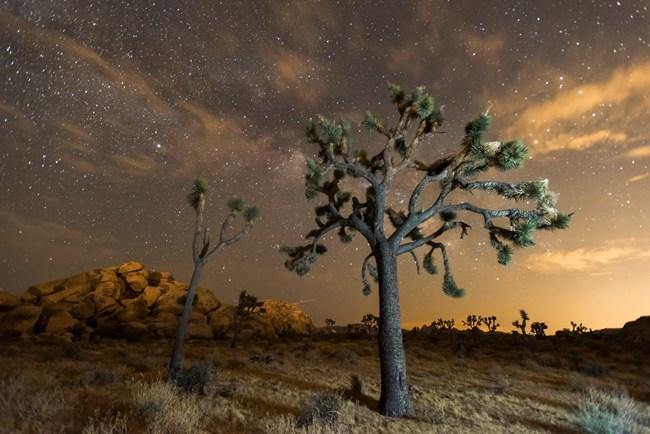 Travel And Talk Travel California Joshua Tree National Park
